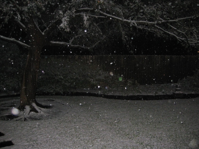DECEMBER_2008 006.jpg
